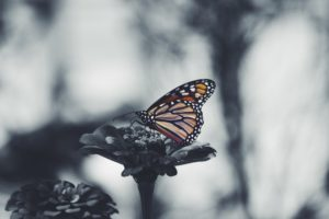 Finding Refuge and Hanging On